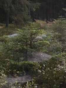 Kurs na przewodnika Białowieskiego Parku Narodowego
