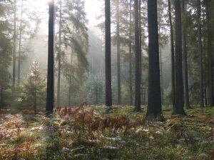 Narewka nie godzi się na poszerzenie granic Białowieskiego Parku Narodowego