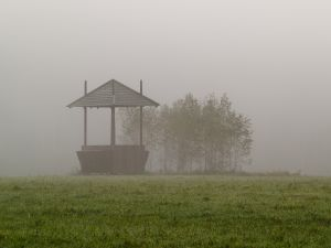 Skandaliczna wycinka w Puszczy Białowieskiej